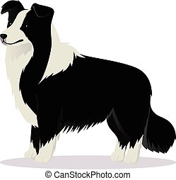 Border Collie dog black and white vector illustration