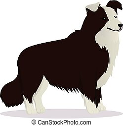 Border Collie dog brown vector illustration