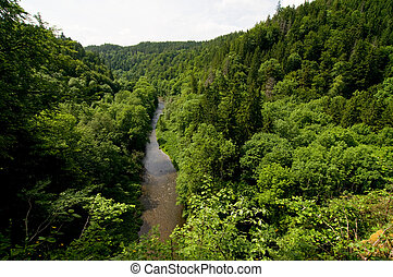 arroyo - calm river between trees in the Black Forest