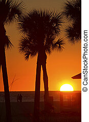 Sun setting behind Palm trees on Gulf Coast of Florida