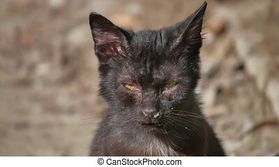 Old homeless cat pet outdoor - Old homeless cat pet the...
