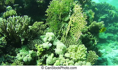 Coral Reefs in the Red Sea, Egypt - Beautiful Colorful...