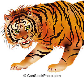 Siberian tiger - vector - Illustration of the Siberian tiger...