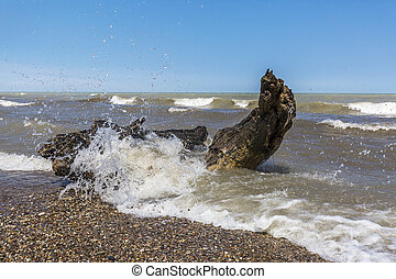Waves Crashing Over Driftwood on a Lake Huron Beach -...