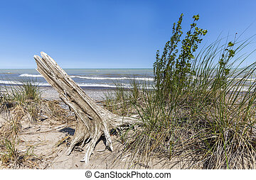 Sand dune and tree stump next to Lake Huron - Sand dune with...