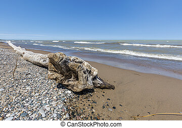 Driftwood and Pebbles on a Lake Huron Beach - Ontario,...