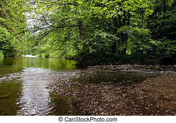 calm water - calm river in the Black Forest between green...