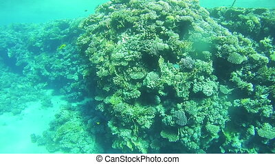 Coral Reefs in the Red Sea, Egypt - Coral Reefs in the Red...