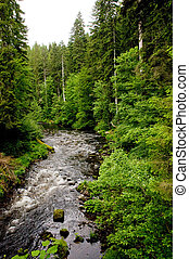 whitewater in the Black Forest between rocks and trees