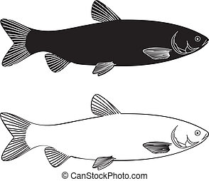Fish - Grass Carp - vector illustration black and white...
