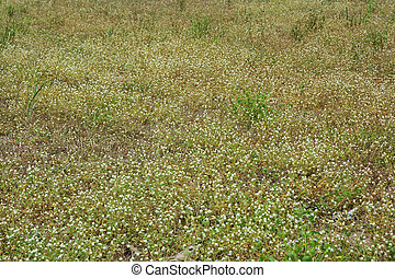 Field of Flower Grass ** note select focus with shallow...