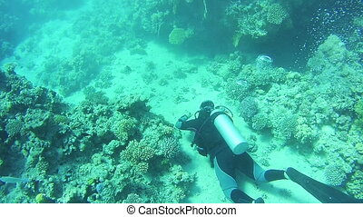 Scuba diver underwater. Red Sea, Egypt. - EGYPT, SOUTH...