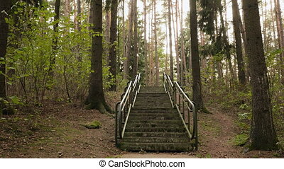 Stairs to the top. Autumn daytime. Smooth dolly shot.