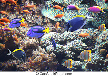 Underwater scene with tropical fish