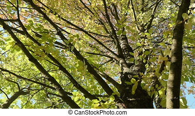 Up to the tree crown. Autumn daytime. Smooth dolly shot.