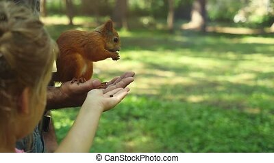 Cute little girl feed the red squirrels in the Park in slow...