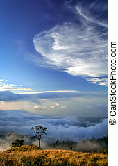View From Gunung Rinjani - Lonely tree on a top of a ridge...