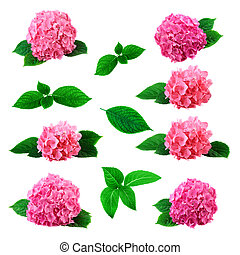Large collection with hydrangea flower isolated on white background
