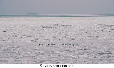 Seagulls on the Frozen Ice in the Sea. Gulls fly over the...