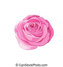 Pink rose on white background. Vector illustration.