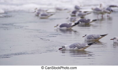 Seagulls Sitting on the Frozen Ice-Covered Sea