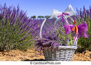Lavender spirit - lavender field in south of France with...