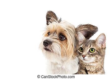 liten, Närbild, hund, tillsammans, katt
