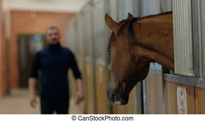 The man approaches his horse in the stables. - The young man...