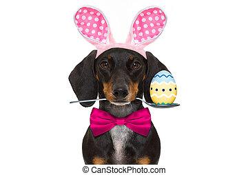 耳朵, 復活節, 狗,  bunny