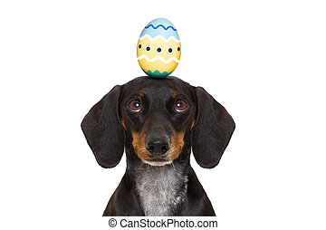easter bunny dog with egg