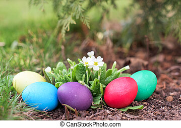 Easter hunt in spring - Different color ester eggs among...