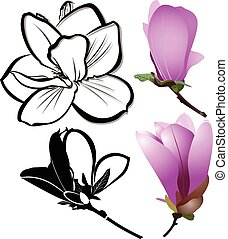 decoration of few magnolia flowers. pink magnolia flower...