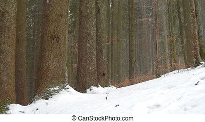 Snowfall in the winter forest