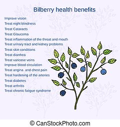 Bilberry ripe. Vector illustration - Bilberry health...