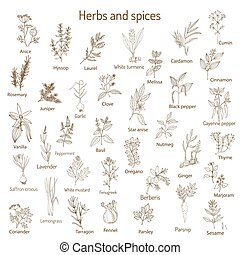 Hand drawn set of culinary herbs and spices. Vector...