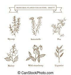 Vintage collection of hand drawn medical herbs and plants....