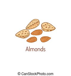 Almond Hand drawn - Almond nuts. Hand drawn vector...