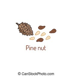 Pine nuts and pine cone. Hand drawn vector illustration