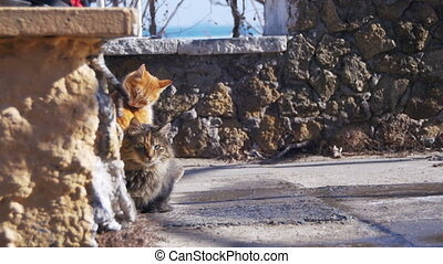 Homeless Cats on the Street Eat Food in Early Spring. Two...