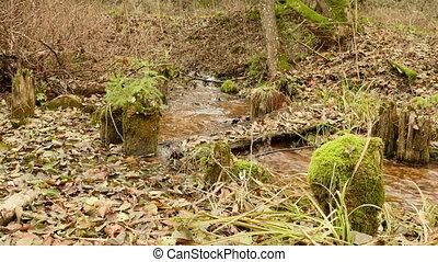 Broken wooden bridge on the forest river. Autumn daytime....