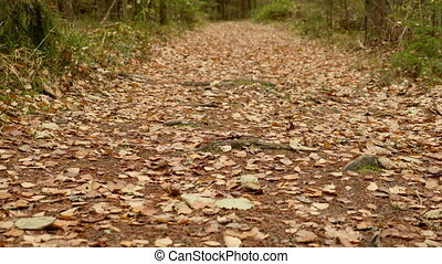 On the Ground of the Trail. Autumn daytime. Smooth dolly...