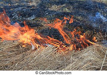 fire in herb