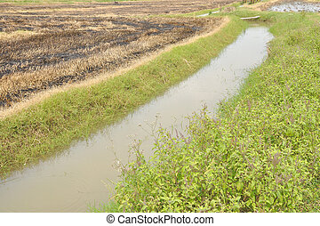 Dry and green Rice Field farm dike with small canal.