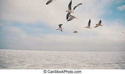 Seagulls Flying in the Air and Catch Food on Blue Sky...