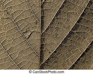texture of the leaf sheet
