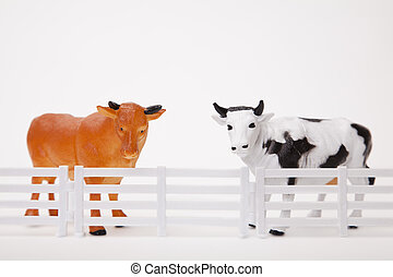 Bull Cow Fence - Toy bull and cow figurines standung behind...