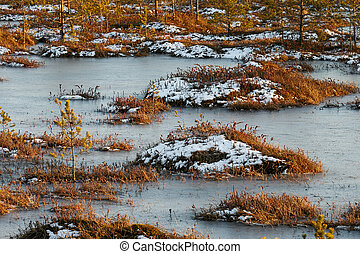 Orange grass on a swamp in winter - Orange swamp grass out...