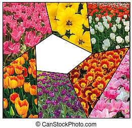 Tulip fields collage of different tulips