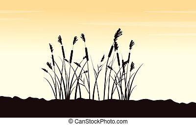 Beauty scenery with course grass silhouettes