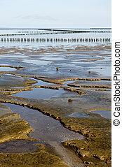 Mudflat during ebb in Dutch water landscape